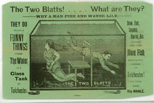 The Blatts - They do all kinds of funny things under the water in a glass tank