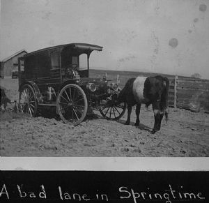 Bookmobile, muddy lane and cows